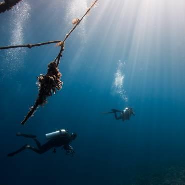 Plongeurs contre jour