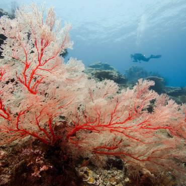 Plongeur eau chaude